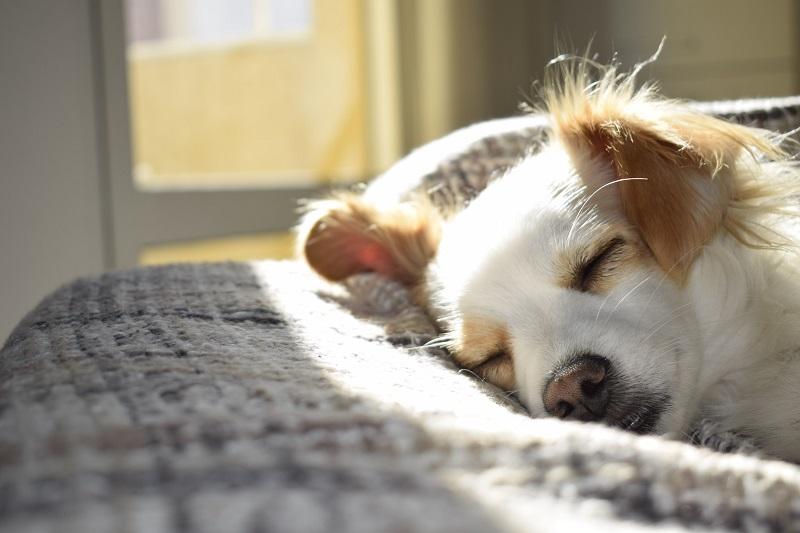 חטיפי קנאביס לכלבים
